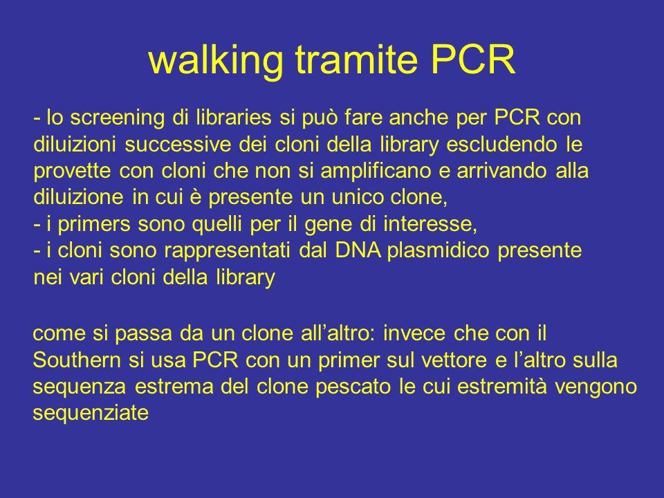 walking tramite PCR