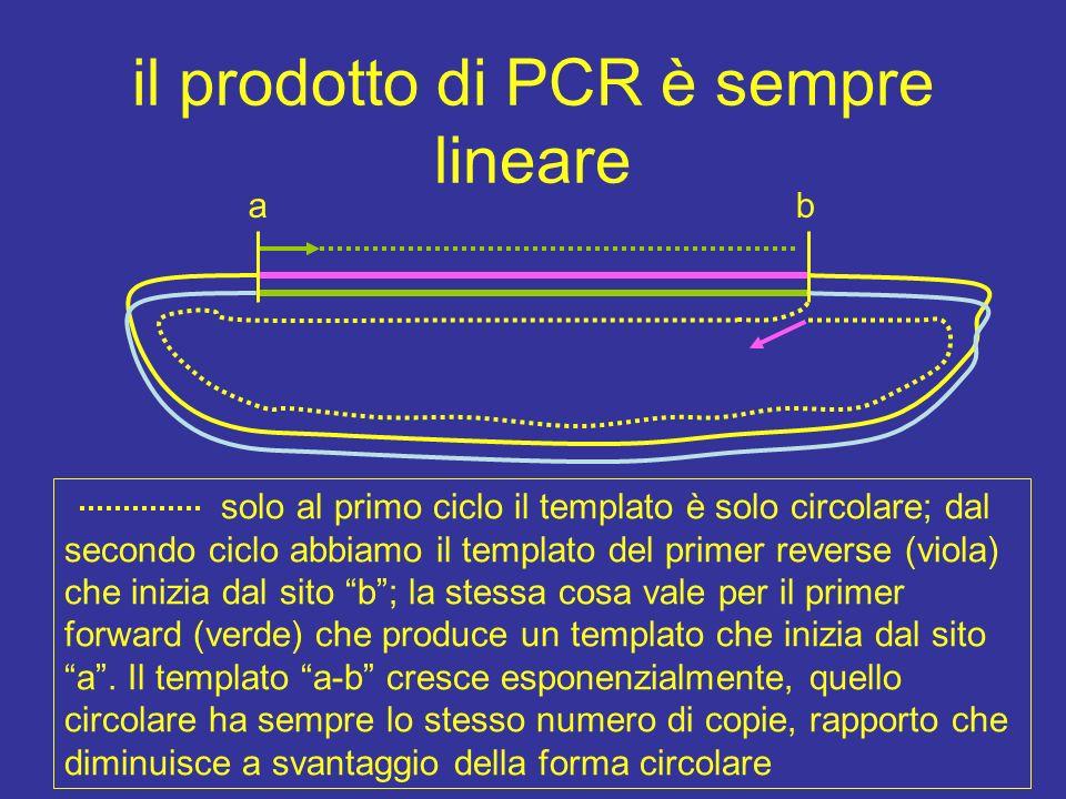 il prodotto di PCR è sempre lineare