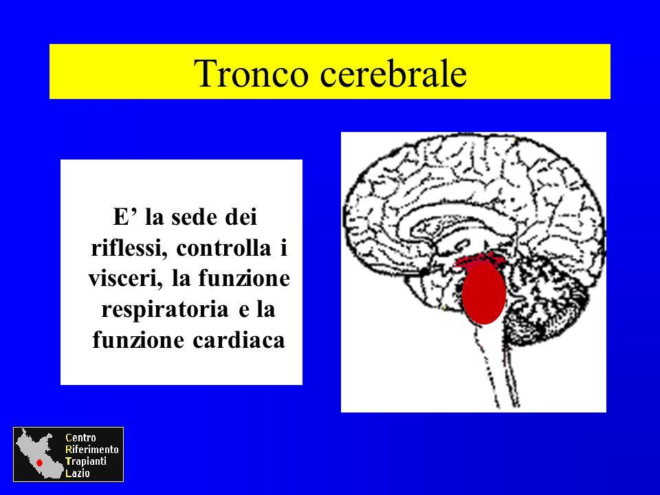 Tronco cerebrale E' la sede dei riflessi, controlla i visceri, la funzione respiratoria e la funzione cardiaca.