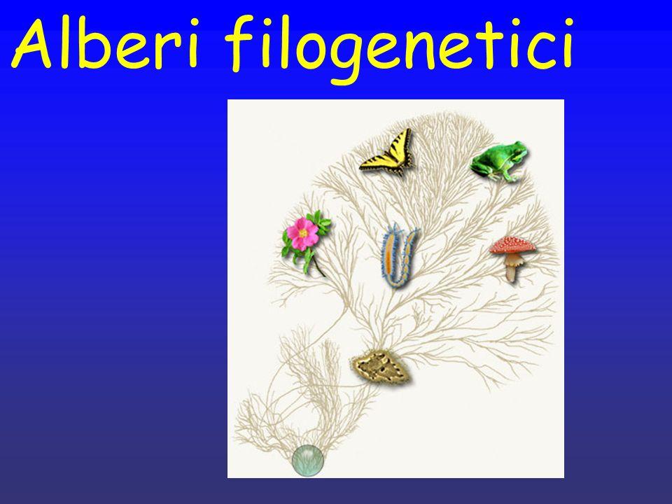 Alberi filogenetici