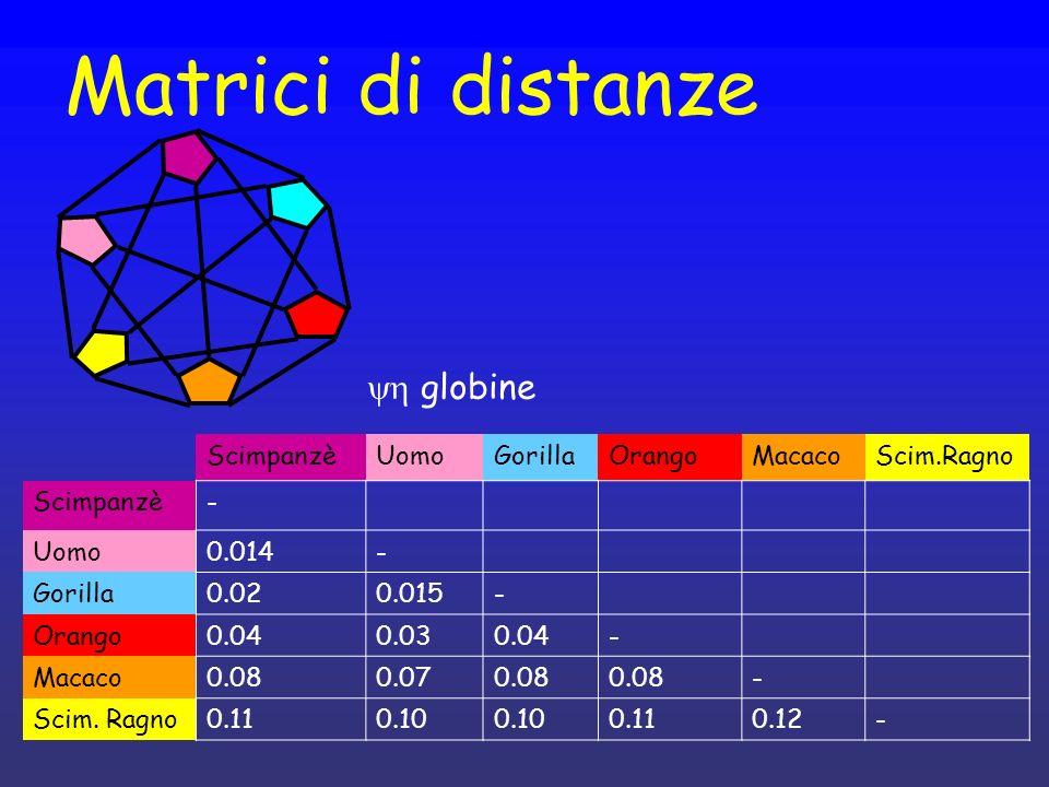Matrici di distanze yh globine Scimpanzè Uomo Gorilla Orango Macaco