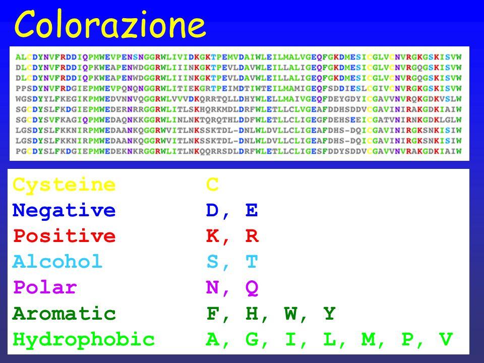 Colorazione Cysteine C Negative D, E Positive K, R Alcohol S, T
