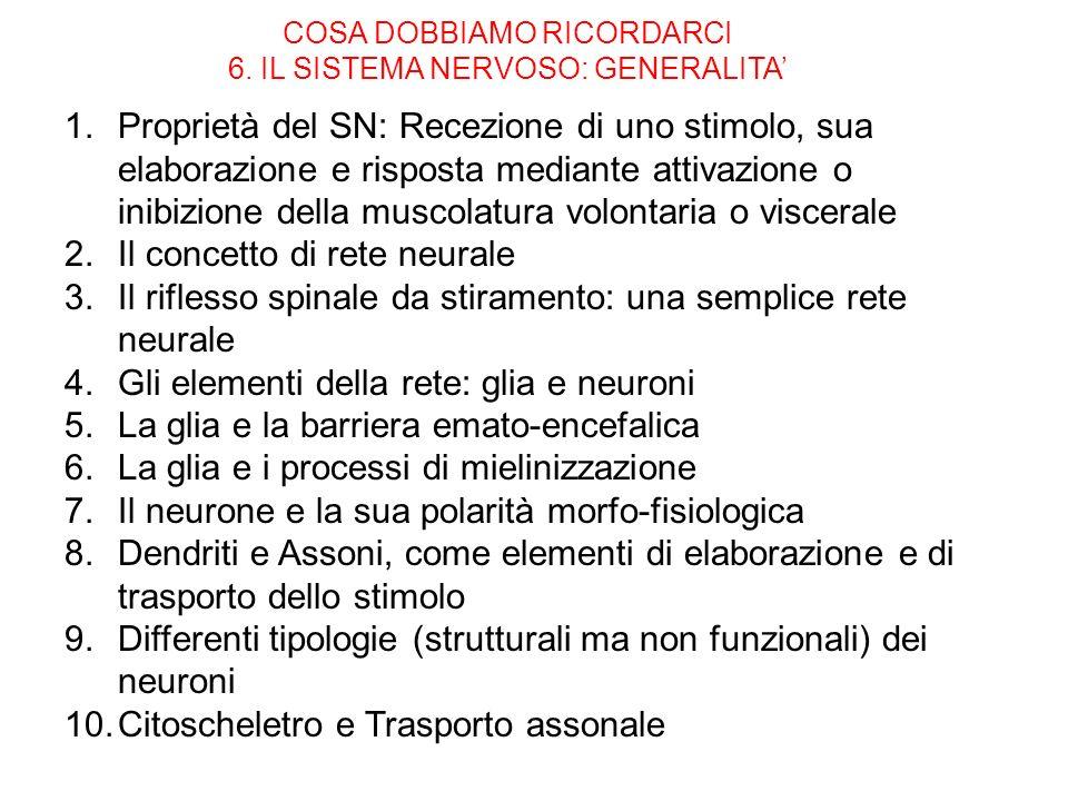 COSA DOBBIAMO RICORDARCI 6. IL SISTEMA NERVOSO: GENERALITA'
