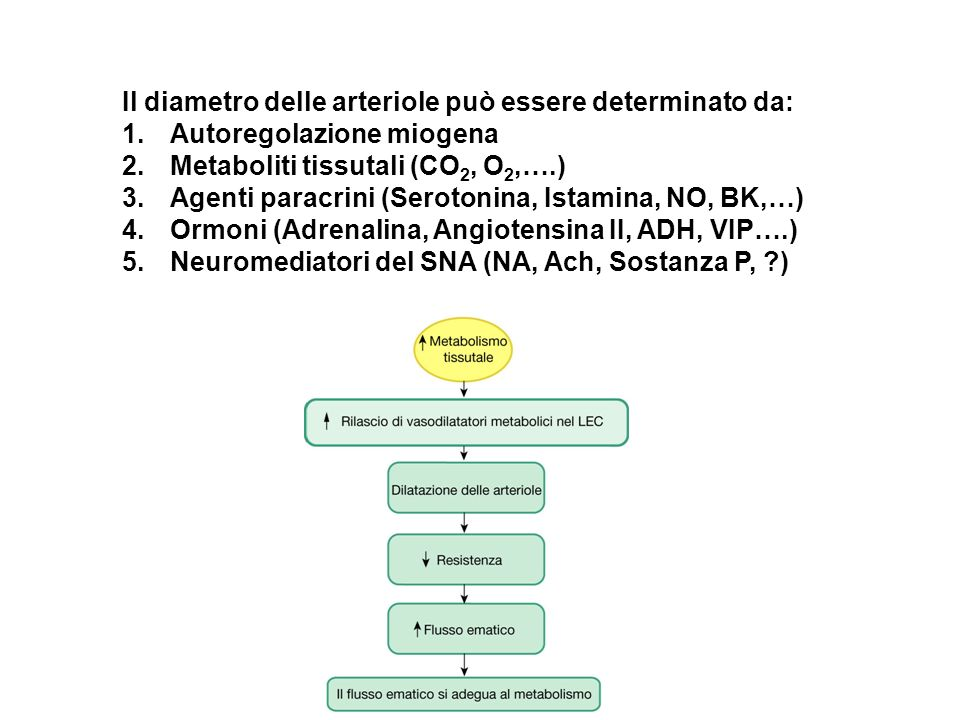 Il diametro delle arteriole può essere determinato da: