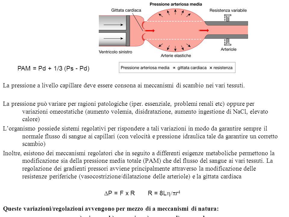 a) miogena b) paracrina c) nervosa d) ormonale