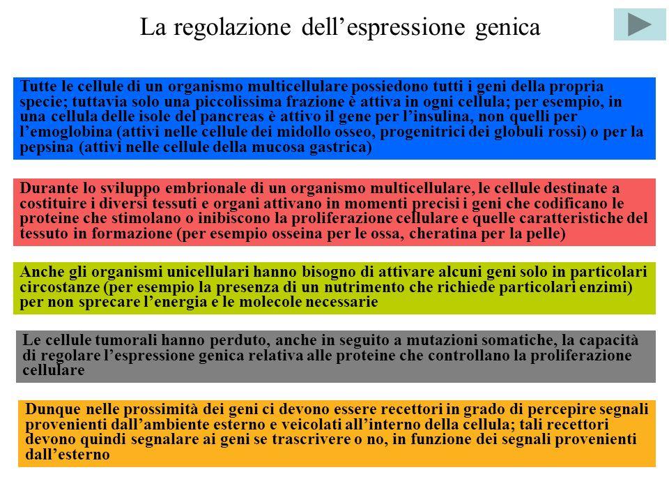 La regolazione dell'espressione genica