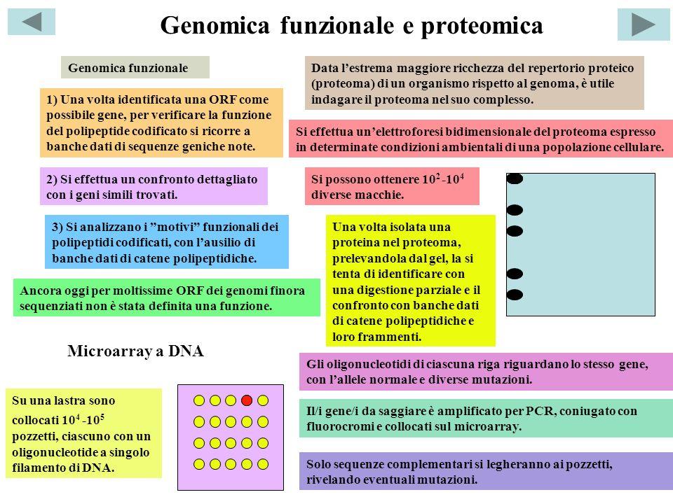 Genomica funzionale e proteomica