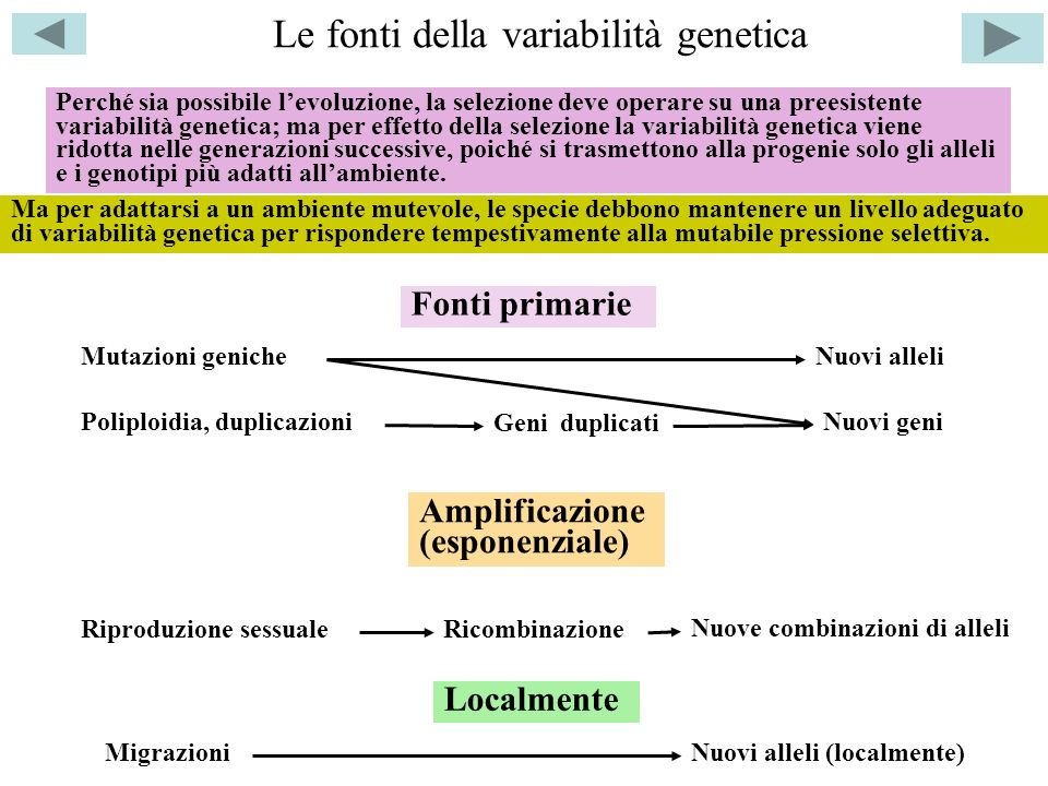 Le fonti della variabilità genetica