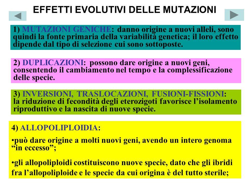 EFFETTI EVOLUTIVI DELLE MUTAZIONI
