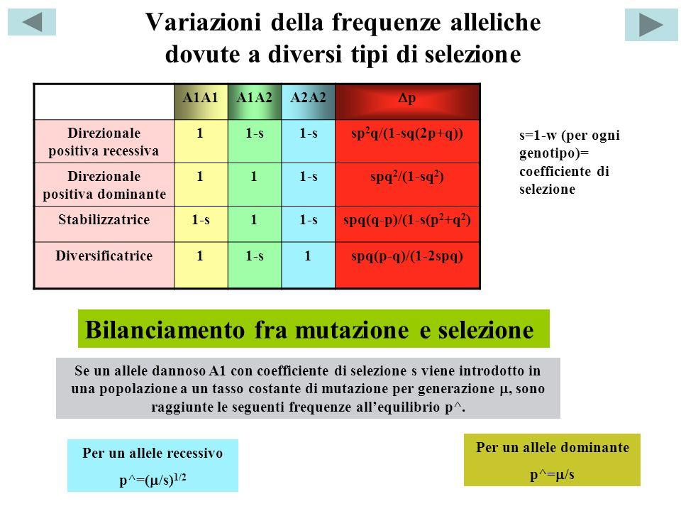 Bilanciamento fra mutazione e selezione