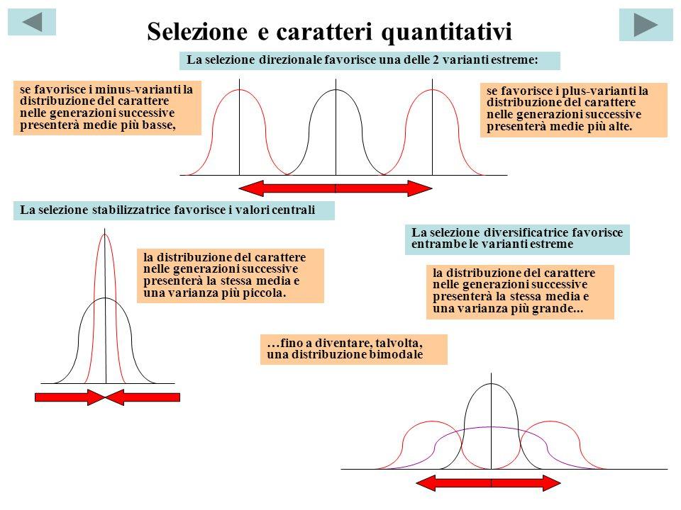 Selezione e caratteri quantitativi