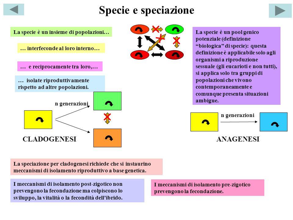 Specie e speciazione CLADOGENESI ANAGENESI