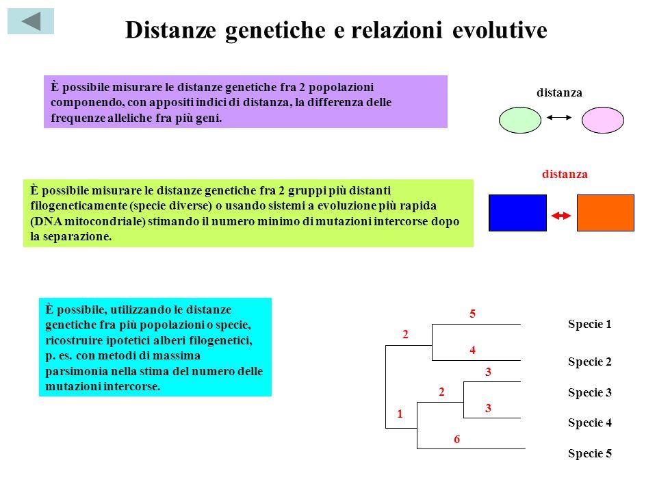 Distanze genetiche e relazioni evolutive