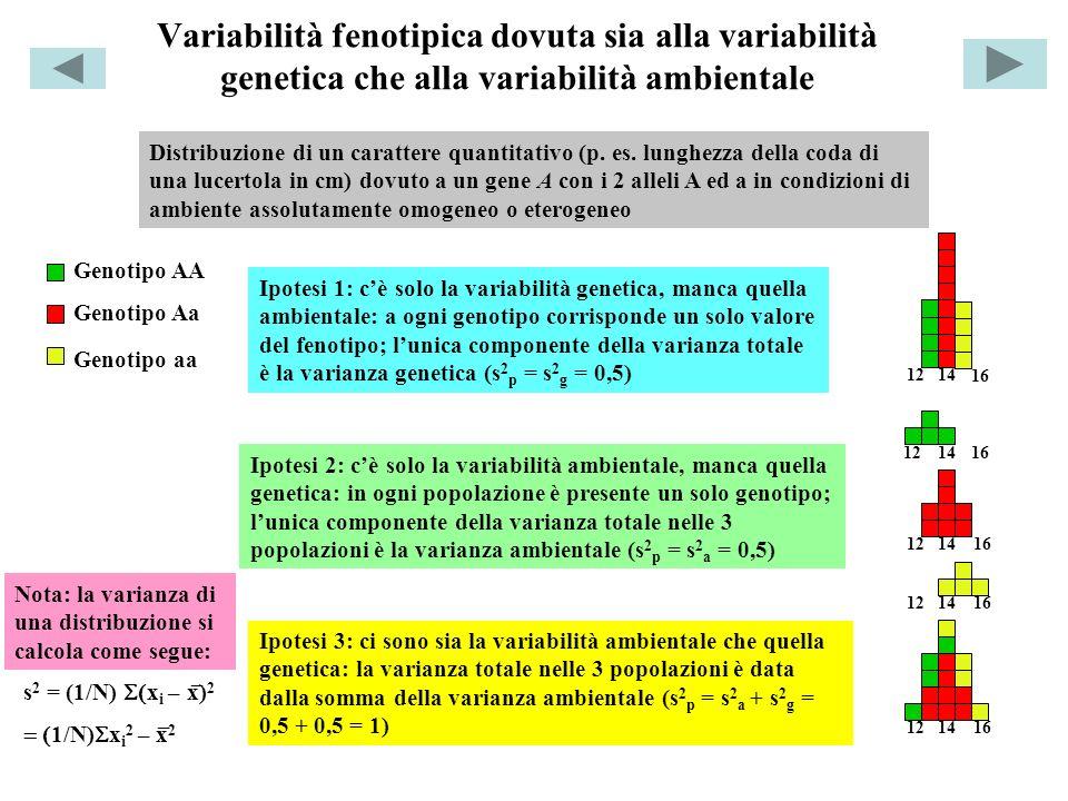 Variabilità fenotipica dovuta sia alla variabilità genetica che alla variabilità ambientale