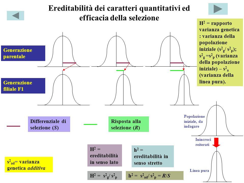 Ereditabilità dei caratteri quantitativi ed efficacia della selezione