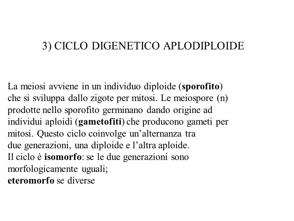 3) CICLO DIGENETICO APLODIPLOIDE