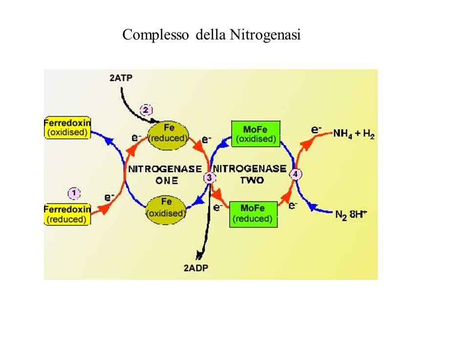 Complesso della Nitrogenasi