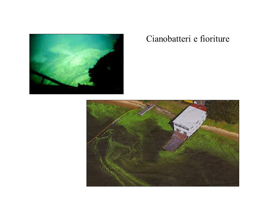 Cianobatteri e fioriture
