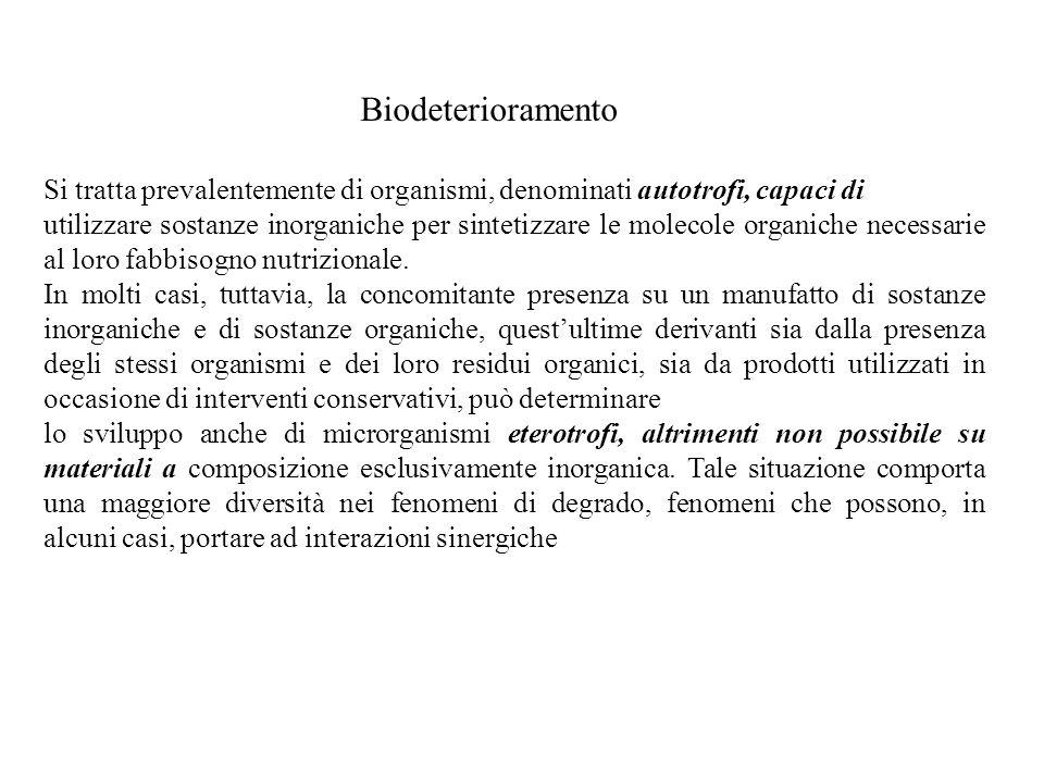 Biodeterioramento Si tratta prevalentemente di organismi, denominati autotrofi, capaci di.