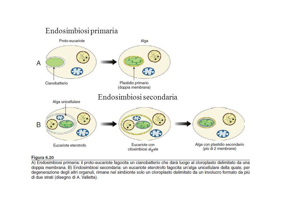 Endosimbiosi primaria