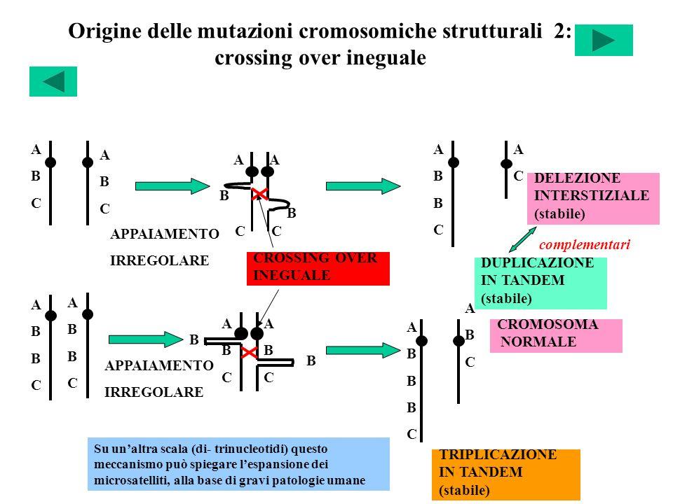 Origine delle mutazioni cromosomiche strutturali 2: crossing over ineguale