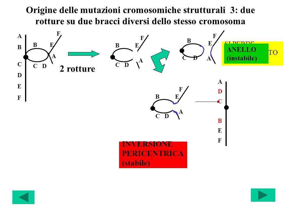 Origine delle mutazioni cromosomiche strutturali 3: due rotture su due bracci diversi dello stesso cromosoma