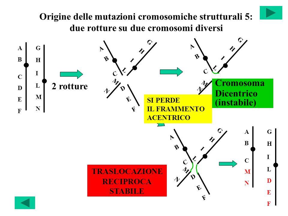 Origine delle mutazioni cromosomiche strutturali 5: due rotture su due cromosomi diversi