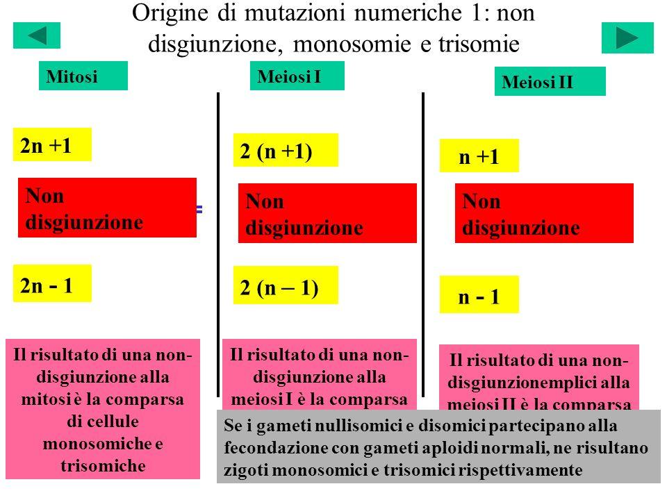 Origine di mutazioni numeriche 1: non disgiunzione, monosomie e trisomie
