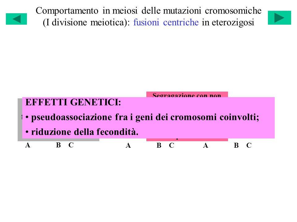 pseudoassociazione fra i geni dei cromosomi coinvolti;