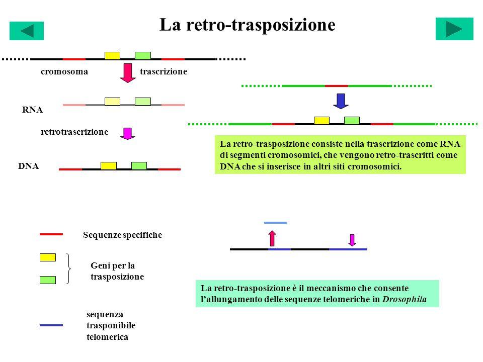 La retro-trasposizione
