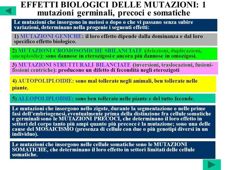 EFFETTI BIOLOGICI DELLE MUTAZIONI: 1 mutazioni germinali, precoci e somatiche