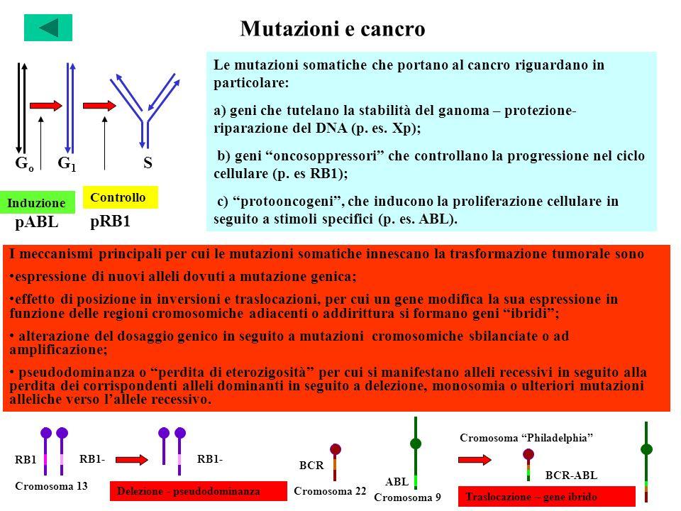 Mutazioni e cancro Go G1 S pABL pRB1