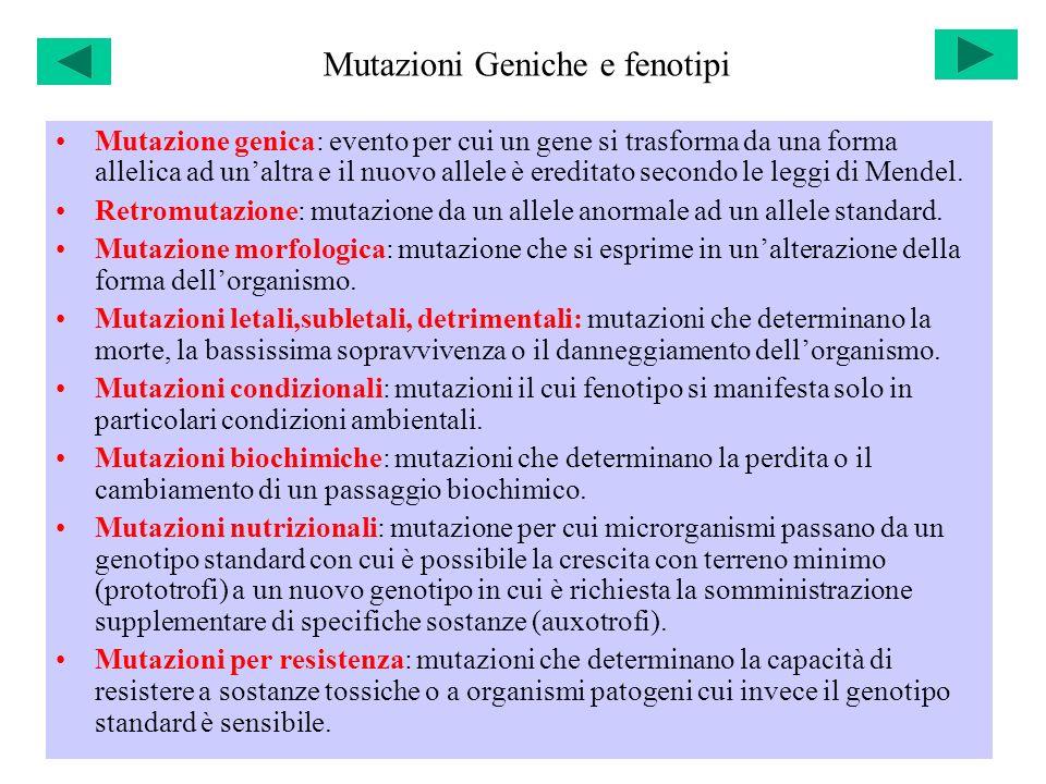 Mutazioni Geniche e fenotipi