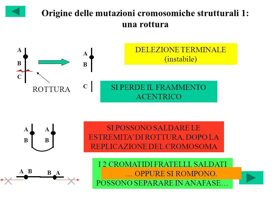 Origine delle mutazioni cromosomiche strutturali 1: una rottura