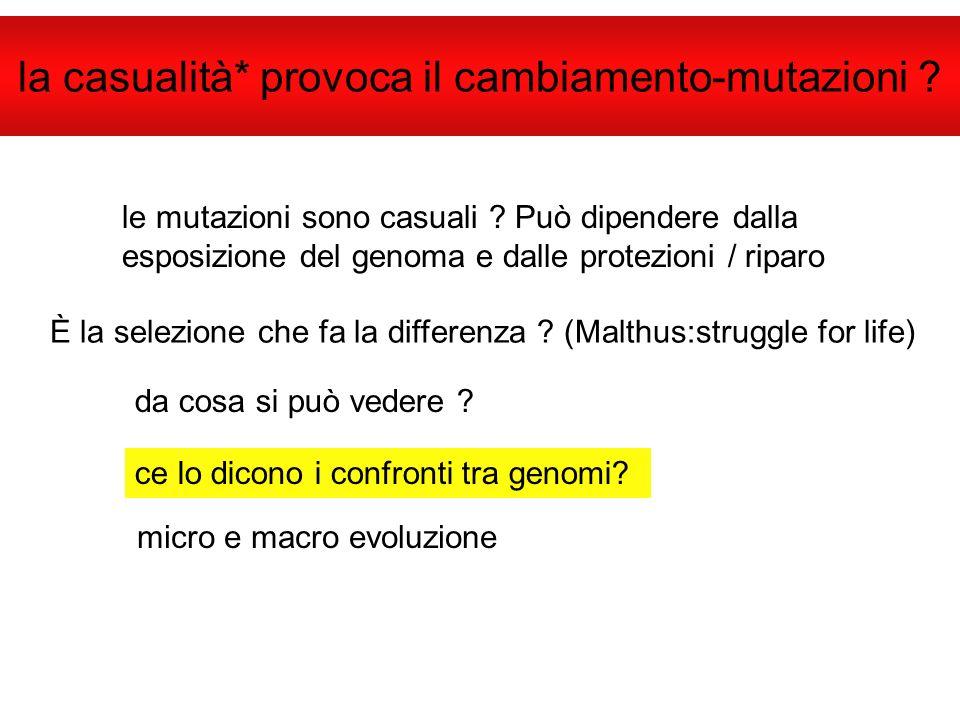 la casualità* provoca il cambiamento-mutazioni