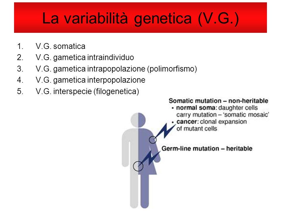 La variabilità genetica (V.G.)