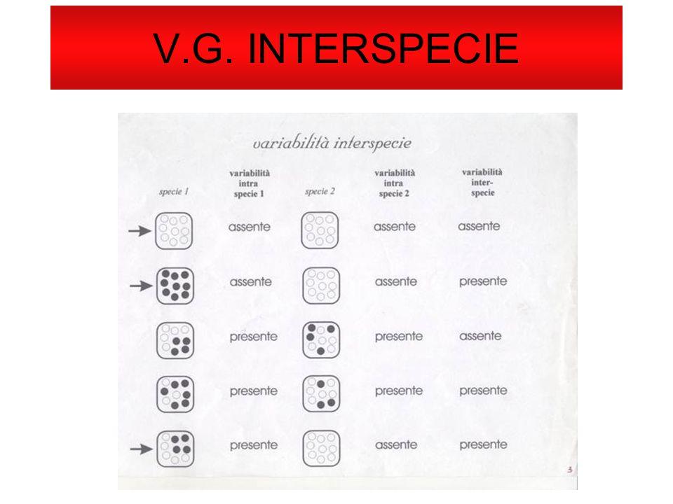 V.G. INTERSPECIE