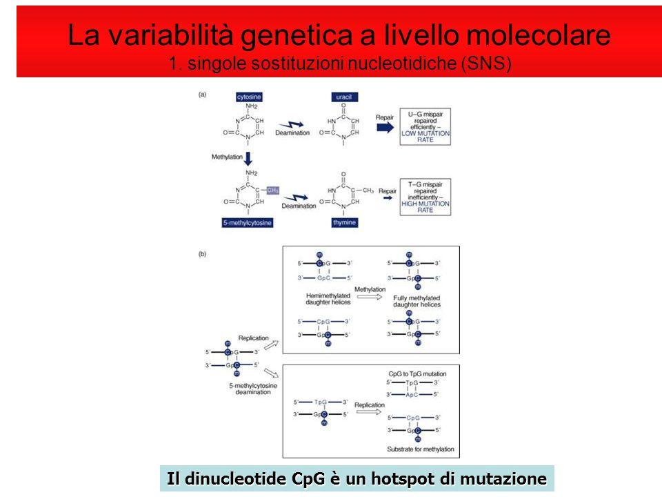 La variabilità genetica a livello molecolare 1