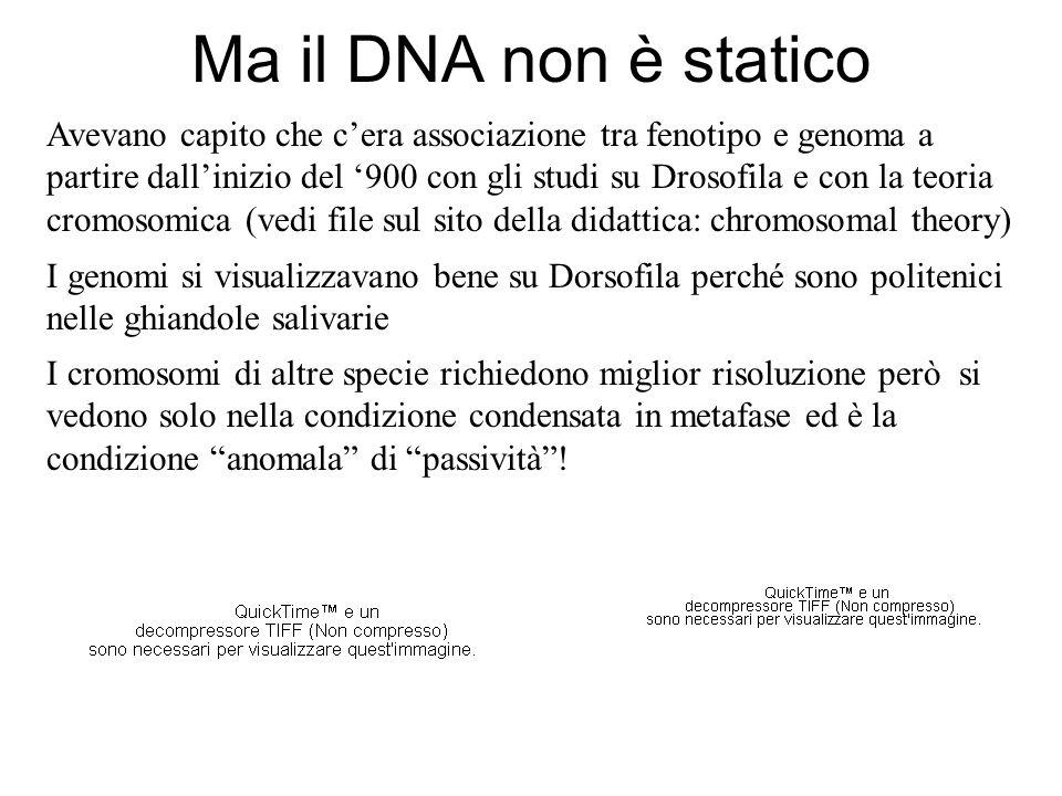 Ma il DNA non è statico