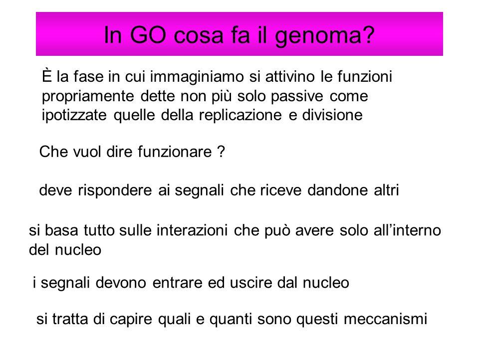 In GO cosa fa il genoma