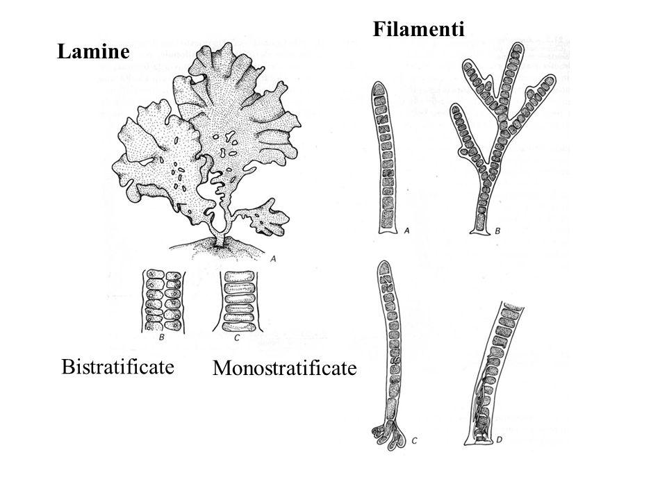 Filamenti Lamine Bistratificate Monostratificate