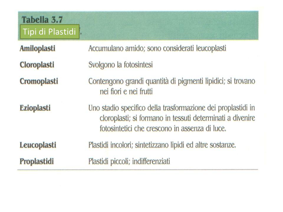 Tipi di Plastidi