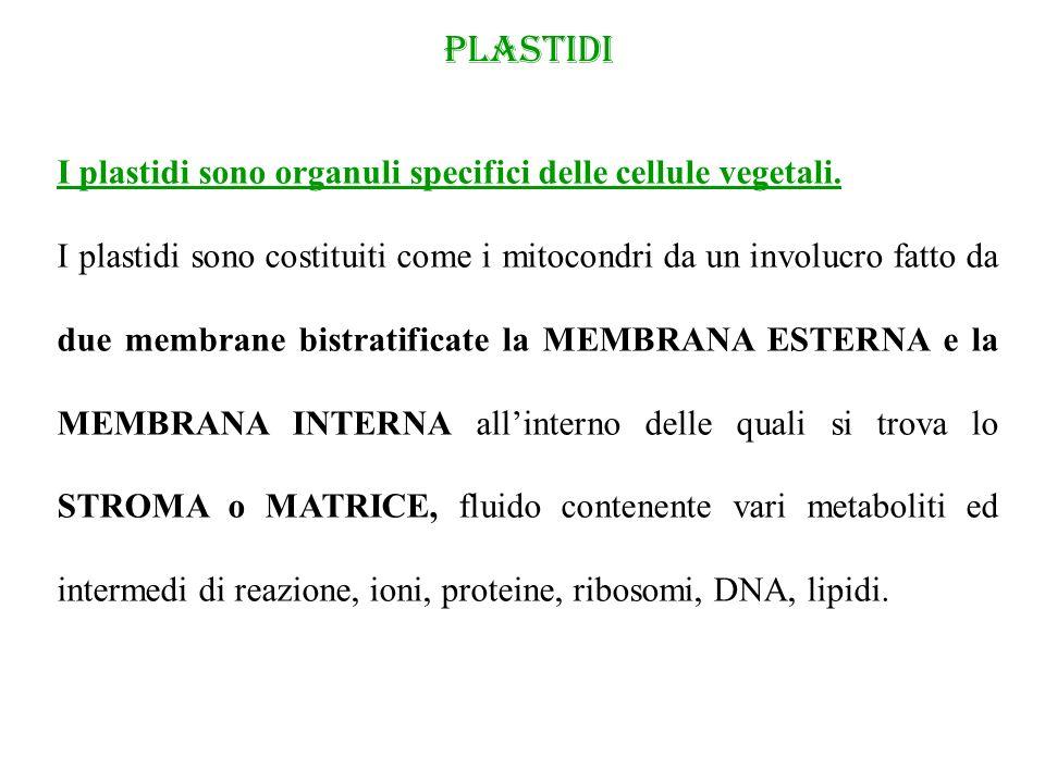 PLASTIDI I plastidi sono organuli specifici delle cellule vegetali.