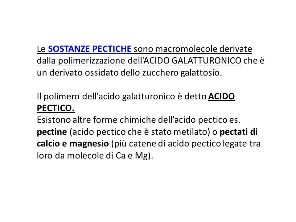 Le SOSTANZE PECTICHE sono macromolecole derivate dalla polimerizzazione dell'ACIDO GALATTURONICO che è un derivato ossidato dello zucchero galattosio.
