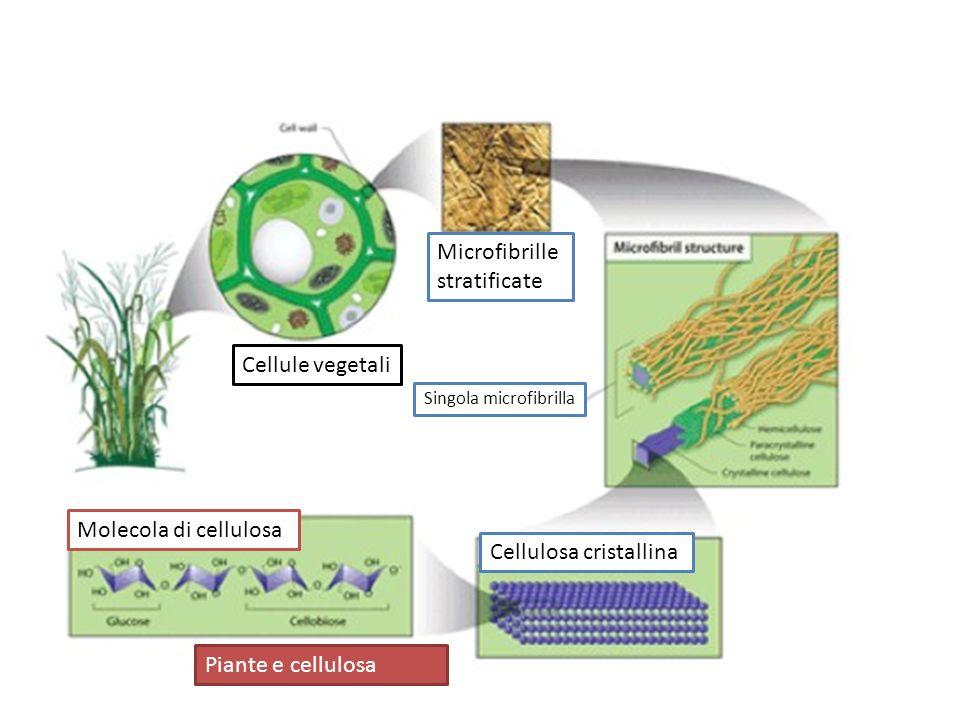 Cellulosa cristallina