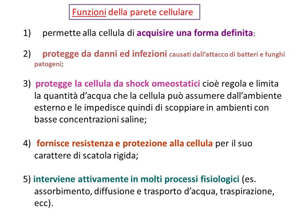 Funzioni della parete cellulare