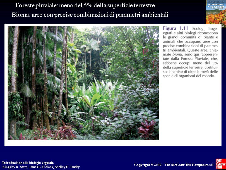 Foreste pluviale: meno del 5% della superficie terrestre
