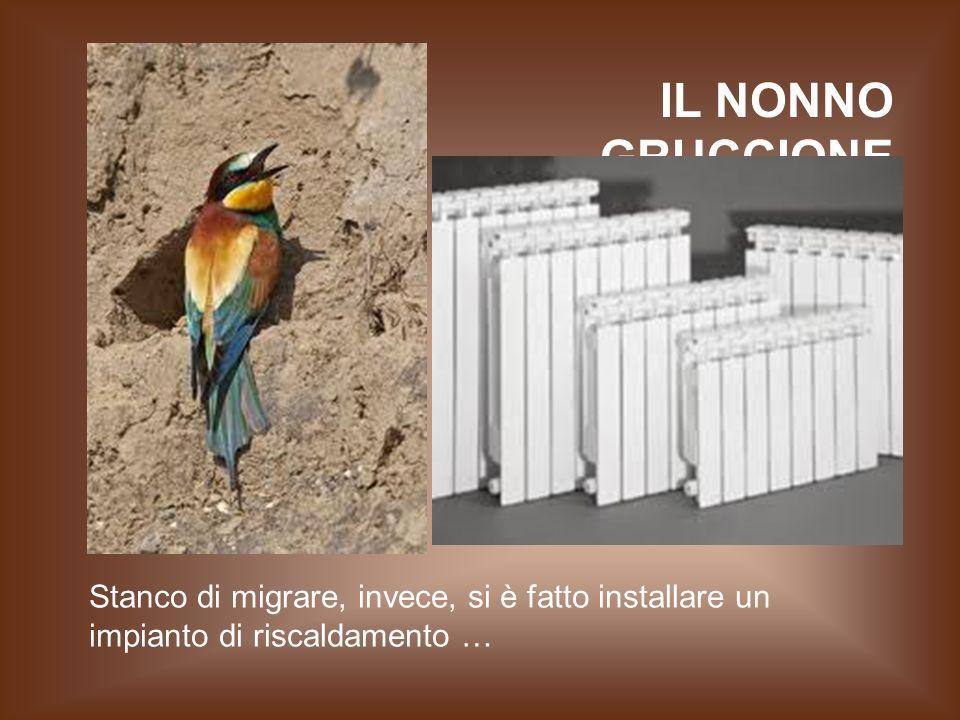 IL NONNO GRUCCIONE Stanco di migrare, invece, si è fatto installare un impianto di riscaldamento …