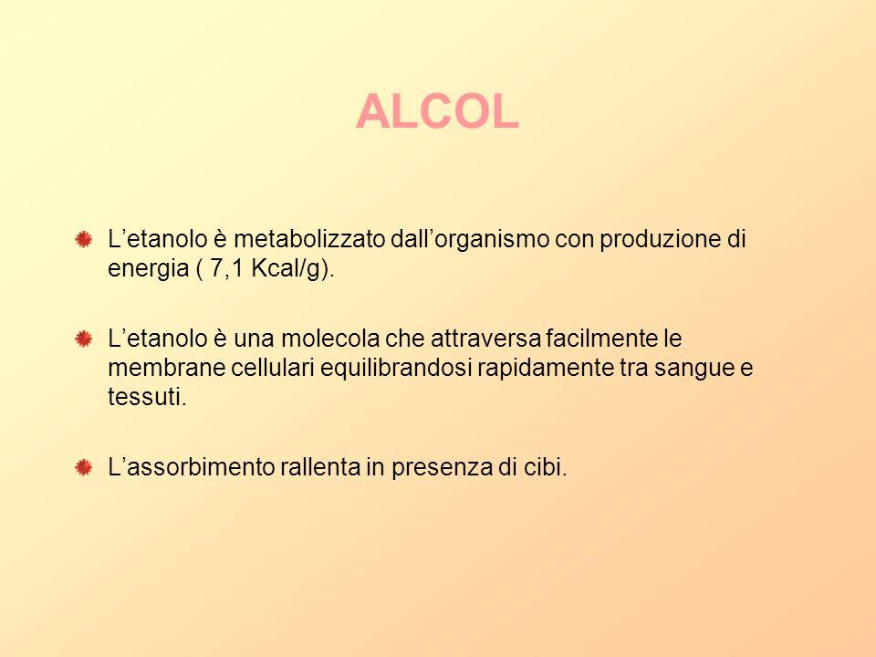 ALCOL L'etanolo è metabolizzato dall'organismo con produzione di energia ( 7,1 Kcal/g).