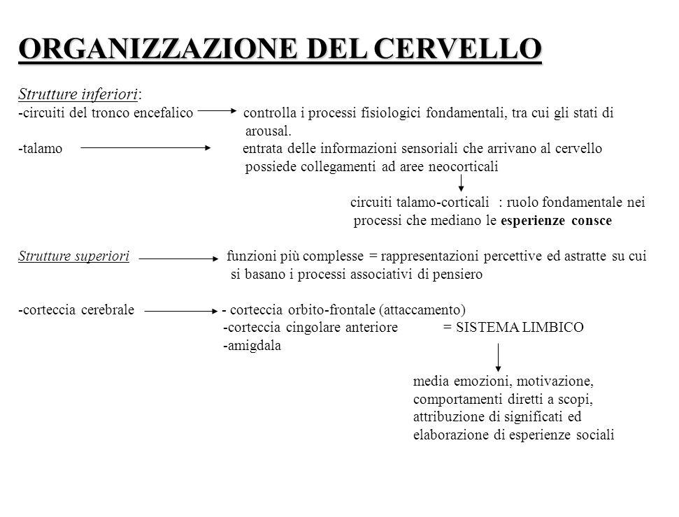 ORGANIZZAZIONE DEL CERVELLO